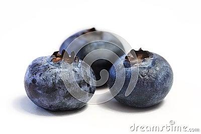 Blueberry Trio Macro