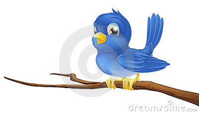 Bluebird on tree branch