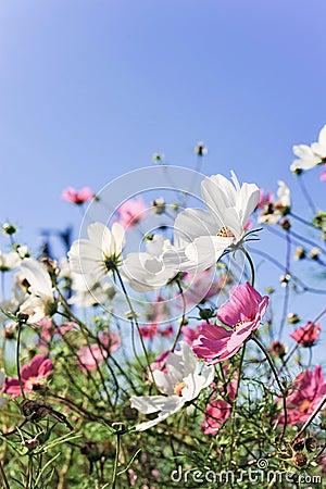 Blumen mit Lächeln