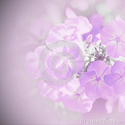 Blur background with flowers