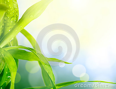 Blur green grass background