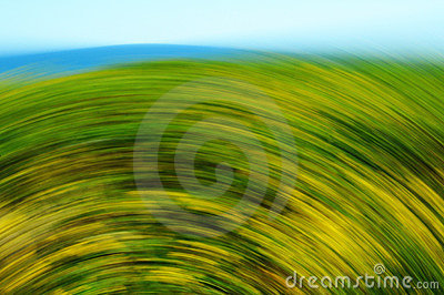 Blurred Flowers and Grass