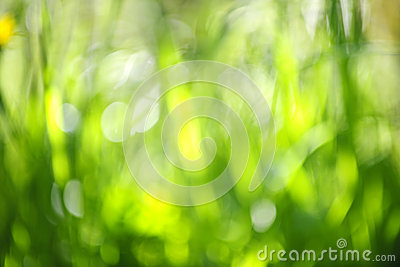 Blurred green background