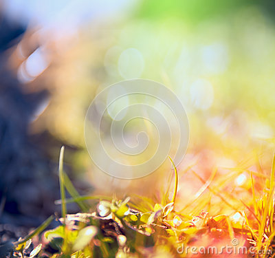 Free Blurred Multicolored Nature Background With Sunshine,light And Bokeh Royalty Free Stock Images - 51485949