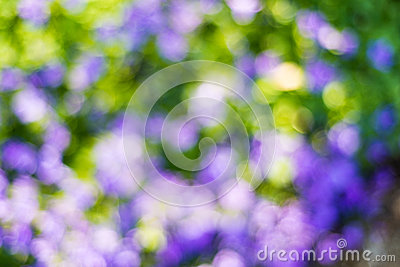 Blurred purple flowers