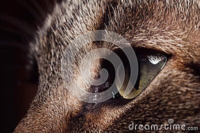 Blush s eyes.