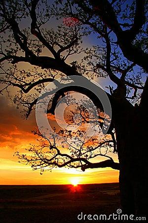 Free Boab Tree, Kimberly, Australia Royalty Free Stock Images - 6202069