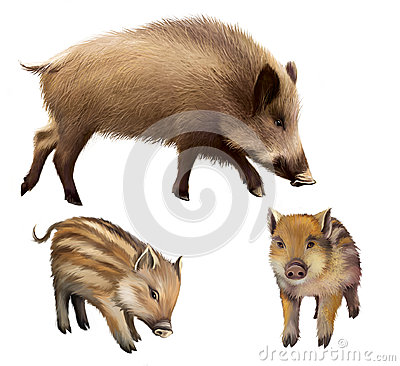 Free Boar Familly, Two Little Piglets And Mother Pig. Isolated Realistic Illustration On White Background Stock Images - 29743084