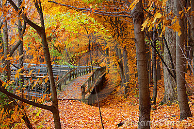 Board walk in autumn landscape
