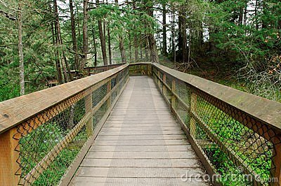 Board walk in forest