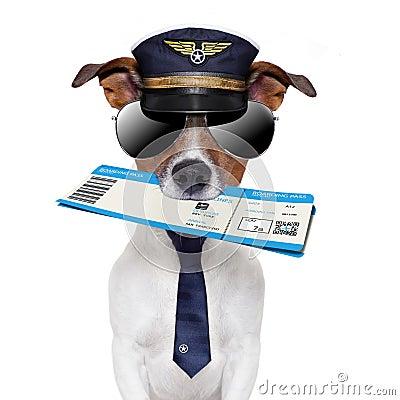 Free Boarding Pass Dog Royalty Free Stock Photo - 25859525