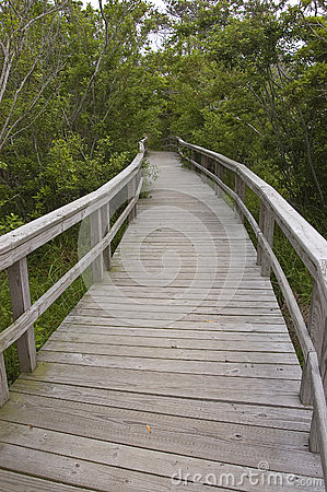 Boardwalk through coastal forest