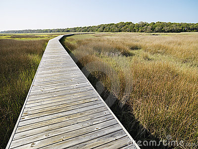 Boardwalk at coastal marsh.