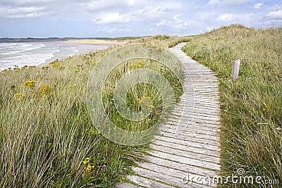 Boardwalk coastal path.