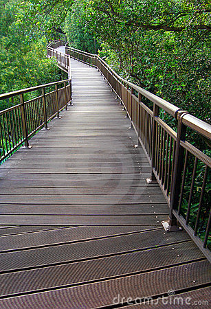 Nature Boardwalk through forest reserve