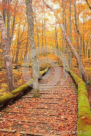 Free Boardwalk In Autumn Forest Royalty Free Stock Photos - 35227708