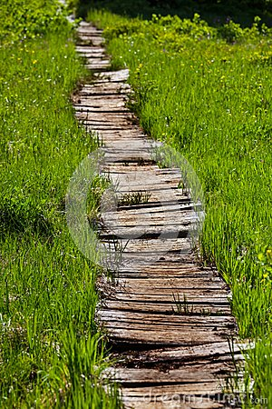 Free Boardwalk In Forest Royalty Free Stock Images - 54160329
