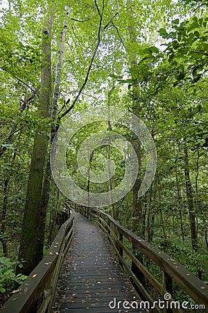 Free Boardwalk In Forest Stock Image - 6209601