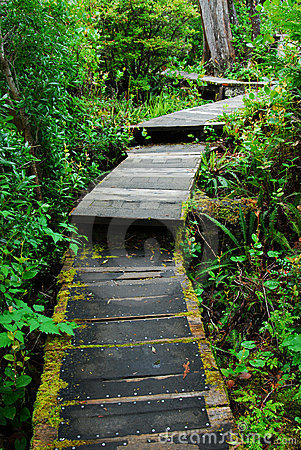 Free Boardwalk In Rain Forest Stock Image - 5401581