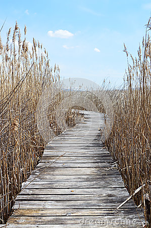 Free Boardwalk In Swampland With Reeds Stock Images - 69695734