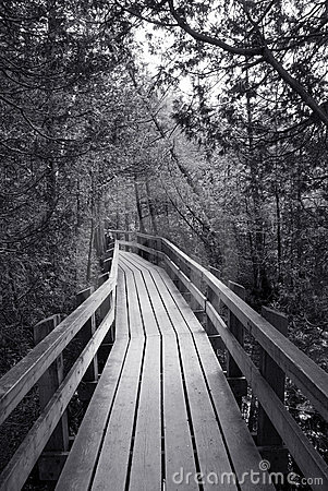 Free Boardwalk In The Forest Stock Images - 16960304