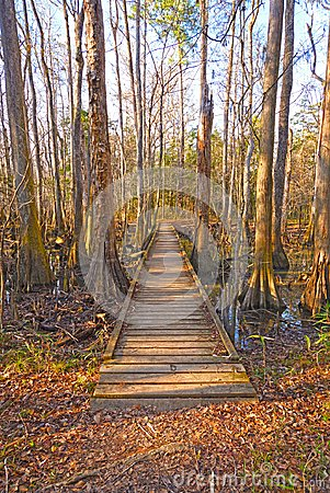 Free Boardwalk Into A Bottomland Forest Stock Images - 114102244
