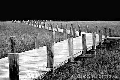 Boardwalk through the marsh.