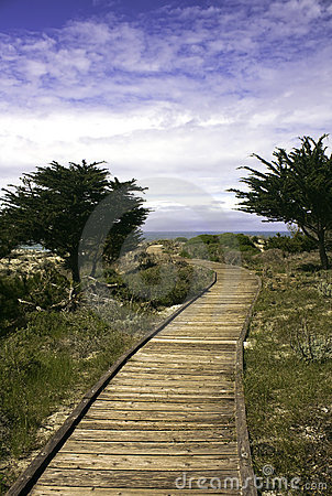 Boardwalk between Monterey cypress trees