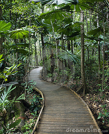 Boardwalk in rainforest.