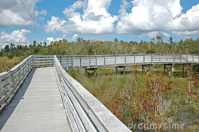 Boardwalk in swamp park