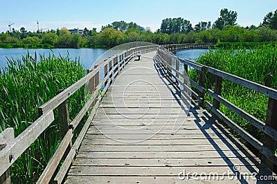 Boardwalk on swan lake