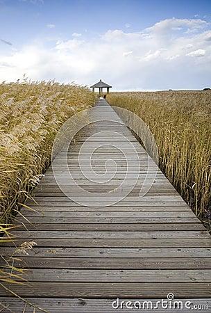 Free Boardwalk Through Reed Field Stock Image - 11345521