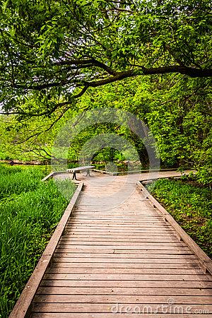 Free Boardwalk Trail Through The Forest At Wildwood Park Stock Photography - 47679842