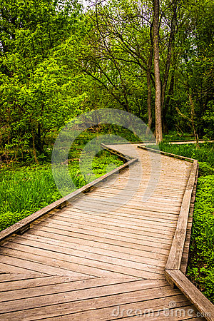 Free Boardwalk Trail Through The Forest At Wildwood Park Royalty Free Stock Image - 47679926