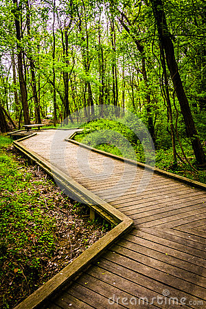 Free Boardwalk Trail Through The Forest At Wildwood Park Royalty Free Stock Photo - 47679985