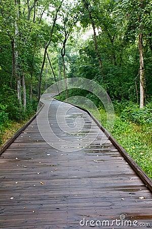 A Boardwalk Trail in the Woods