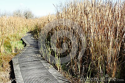 Boardwalk in wetland