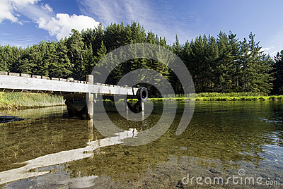 Boat dock with pine trees