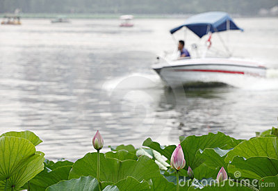 Boat and lotus