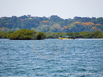 Boat in the mangrove