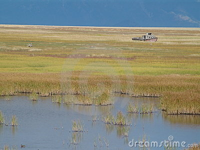 Boat on marsh or wetland