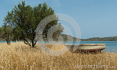 Boat on Mediterranean shore near olive tree