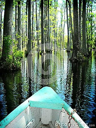 Free Boat On Cypress Swamp Gardens North Carolina Stock Images - 9237014