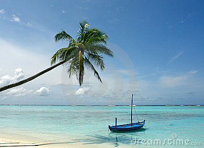 Boat  and palm tree at beach