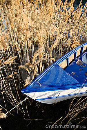Boat and reed