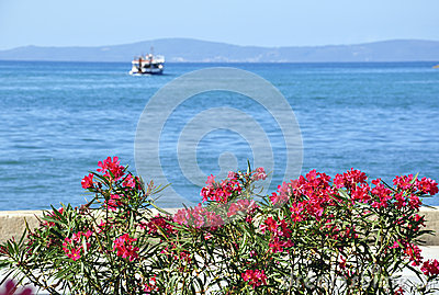Boat, sea and flowers