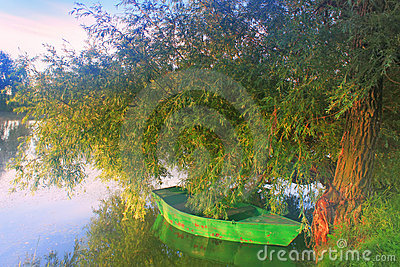 A boat on a tree on the shore of a misty lake