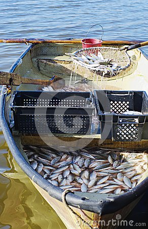 Free Boat With Catch Of Fish Coregonus Royalty Free Stock Photography - 50118027
