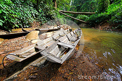 Boats in rainforest