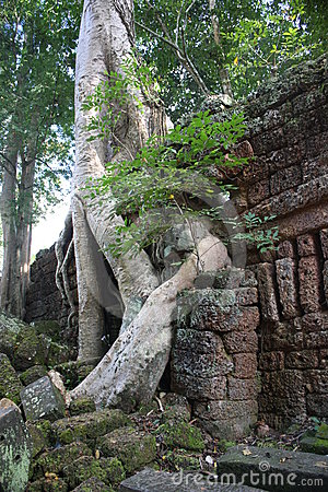 Boddhatree